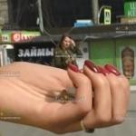 В Питере местные жители зарабатывают на скупке монет евро