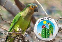 Аруба монета 5 флоринов попугай Аруба