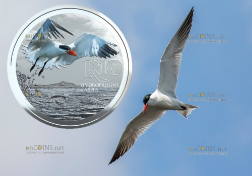 ЮАР монета 10 рандов Каспийская крачка