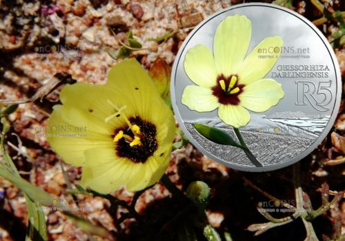 ЮАР монета 5 рандов Гейссориза лучевая