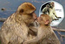 Гибралтар монета 50 пенсов Берберская обезьяна