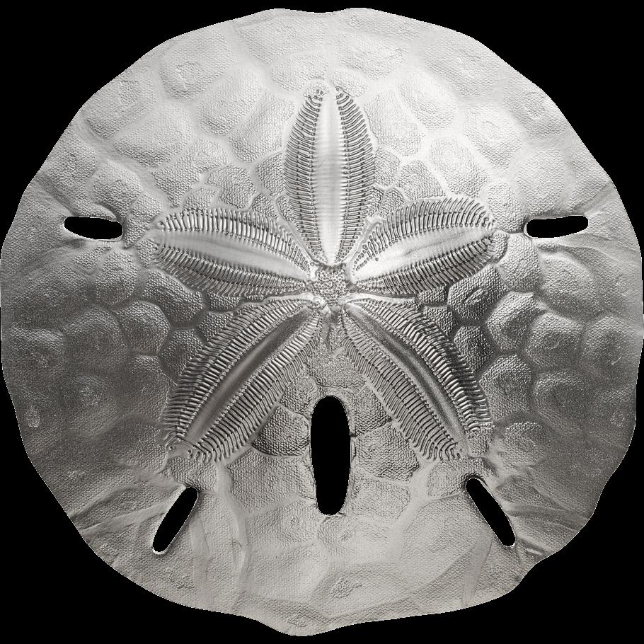 Палау монета 1 Песчаный доллар, реверс