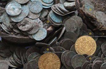 В Словакии стадо диких кабанов раскопало клад