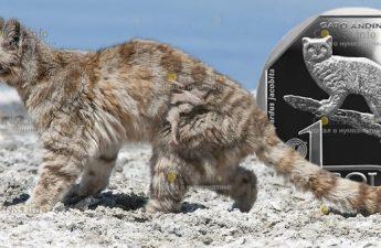 Перу монета 1 соль Андский горный кот