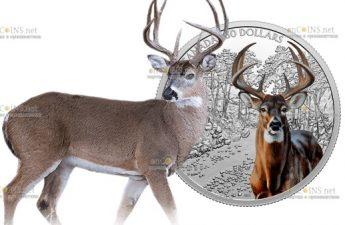 Канада монета 30 долларов Белохвостый олень